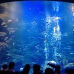 京都水族館は綺麗で楽しかったのとすいぞくぱんを買う時に注意しておいた方がいい事~munejyuka日記