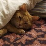 今日もめちゃめちゃ眠たいわ〜munejyuka日誌