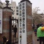 造幣局の桜の通り抜けに行ってきた!