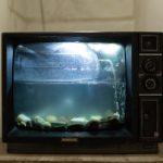 普通?のテレビを買うならコレ!