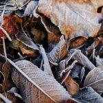 まだ11月やのに霜が凄かったんじゃ!